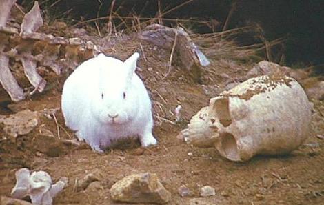 killer_rabbit01