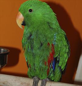 O vendedor disse ao cliente que o papagaio não estava doente